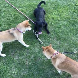 公園で犬友づくり(^^♪