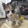 1カ月半くらいの子猫です サムネイル2