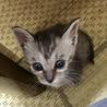 1カ月半くらいの子猫です サムネイル4