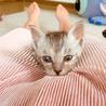 1カ月半くらいの子猫です サムネイル6