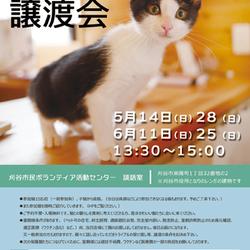刈谷で開催!!3市合同 猫譲渡会