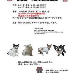 第8回 戸田ニャンコおたすけ隊 猫里親会開催