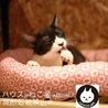 【小唄】白黒ハチワレのシャイガール サムネイル2