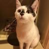 【めい】人も猫も大好きなアイドル系女子 サムネイル3