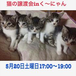 神戸三宮17~19時【猫の譲渡会 in くーにゃん】 サムネイル1