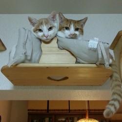ソラとリク、新しいお家に早く慣れてね・・・