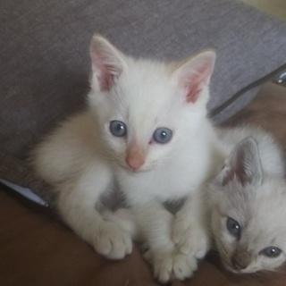 たぶん長毛の白猫さん