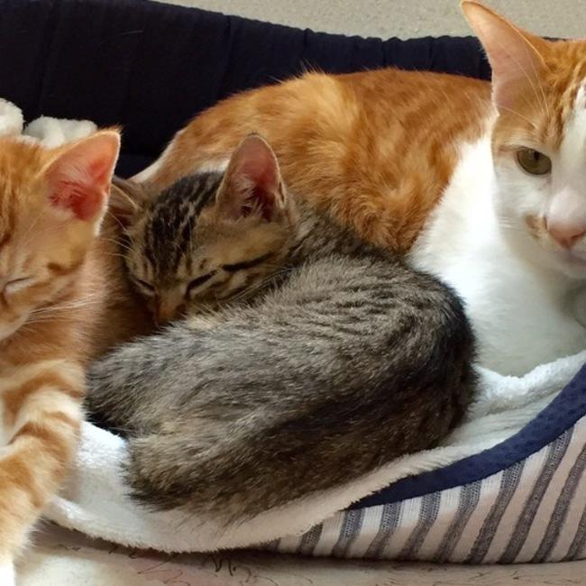 にこまめち猫部のカバー写真