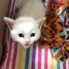 生後1ヶ月の子猫ちゃん サムネイル2