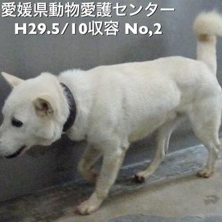 愛媛県動物愛護センターに収容されています!
