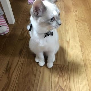 猫ちゃん里親決まりました!