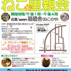 5月20日(土)地域猫から社会猫へ 四谷猫廼舎・里親会