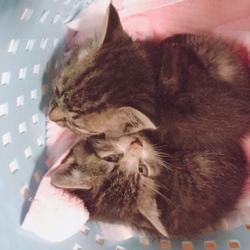 道路脇の子猫を保護…だけどサムネイル