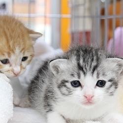 猫の里親会 サムネイル1
