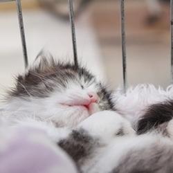 猫の里親会 サムネイル2