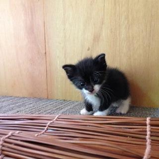 白黒子猫ちゃん。靴下猫で可愛いいです。