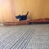 白黒子猫ちゃん。靴下猫で可愛いいです。 サムネイル3