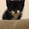 白黒子猫ちゃん。靴下猫で可愛いいです。 サムネイル6