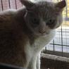 飼い猫修行中、なっちゃんです。 サムネイル2
