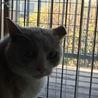 飼い猫修行中、なっちゃんです。 サムネイル3