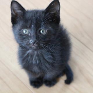 1ヶ月の仔猫たち♥