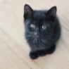 1ヶ月の仔猫たち♥ サムネイル2