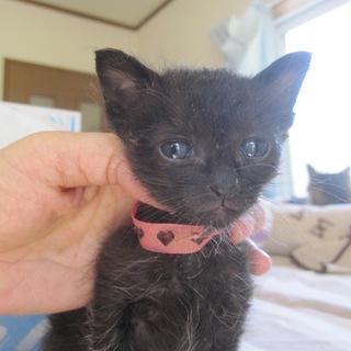かわいい赤ちゃん黒猫 くろえちゃん