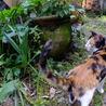メス三毛猫1歳、スリムで毛並みがきれい サムネイル3