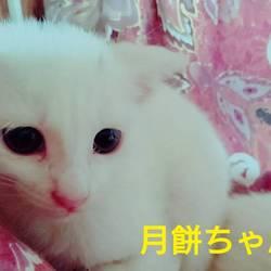 三重県津市 5月28日(日)子猫の譲渡会