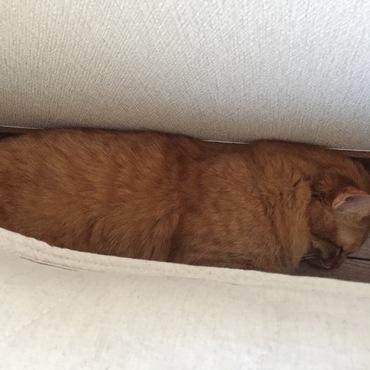 結局、ベッドを下りて挟まりました( ̄∇ ̄)あははは〜