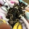 4月に生まれた5匹の子猫の里親募集!