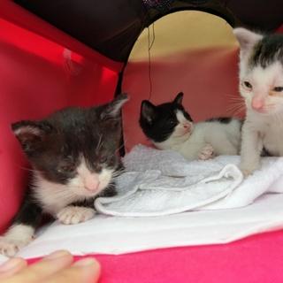 子猫3匹 保護猫