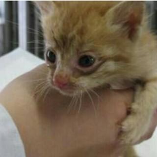 子猫4匹(茶トラ・キジトラ)収容です(>_<)
