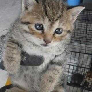 子猫4匹(茶・キジ・ハチワレ)収容です(;_;)