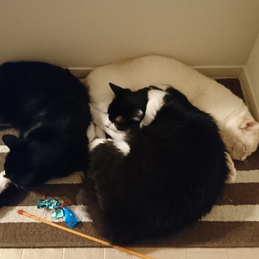 おーい!玄関マットを勝手に(!)運んで、みんなでくつろぐのはなぜなんだーい?絶対に何かしらを敷いて寝たいタイプ…(笑)