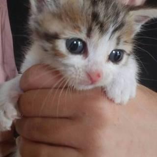 キジ白子猫ちゃん
