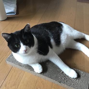 うちの、初めて飼った猫 コテツです。