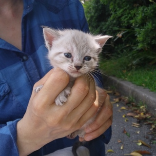【生後1ヶ月】キュートな子猫の里親さん募集♪