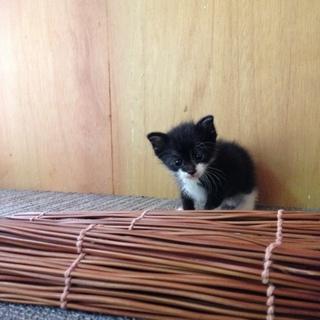 白黒靴下猫ちゃんです。 募集しています!!
