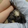 生後一ヶ月の子猫の里親さん募集 サムネイル6