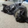 生後一ヶ月の子猫の里親さん募集 サムネイル3