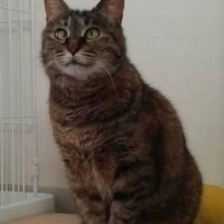 寄り目が可愛すぎスター性ハンパないサビ猫ヨリちゃん