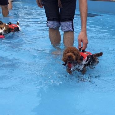 初めてのプールは...水が恐くて泳げなかった〜