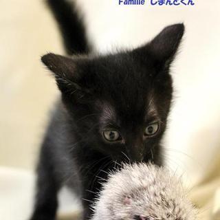 黒子猫のしまんとくん 里親募集中!