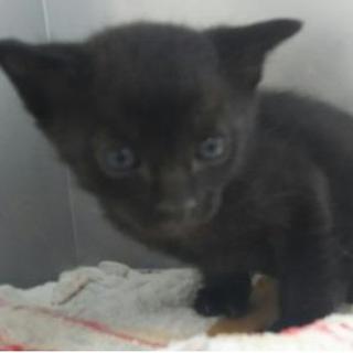可愛い黒猫ちゃんです!期限5月25日まで!