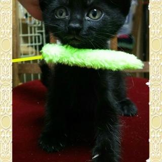 ママが育てた黒猫くーみんちゃん