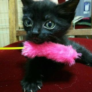ママが育てた黒猫くるみちゃん