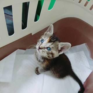 やんちゃで元気な子猫です!!