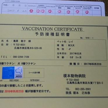 予防接種、受けて来ました。
