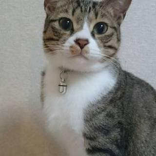 2歳甘えん坊猫。可愛がってくれる方募集!